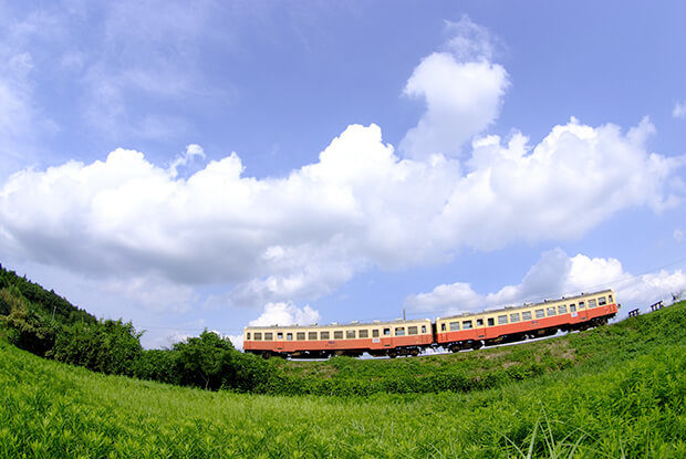 A train in summer colors