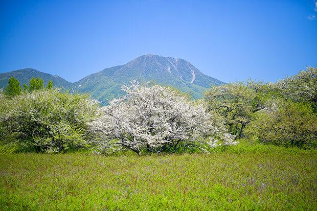 센조가하라 아그배나무