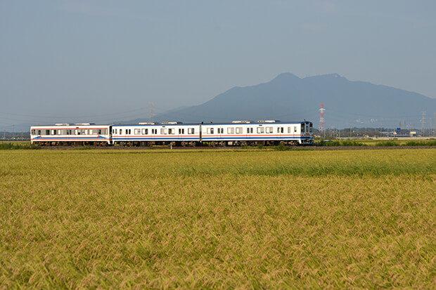 쓰쿠바 산과 황금 빛으로 익은 벼 이삭과 맥주 열차