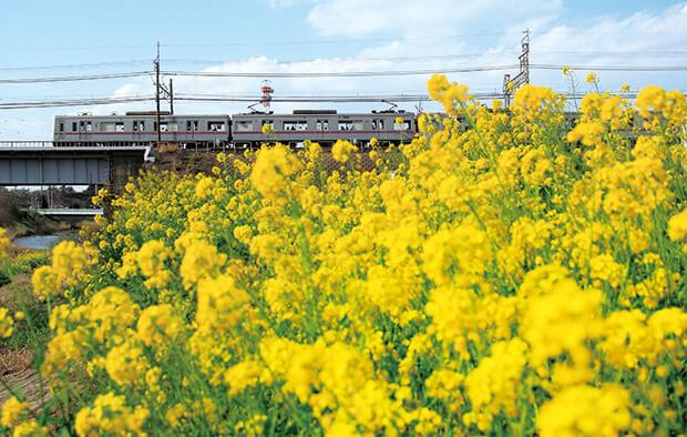 春日景观 3000型