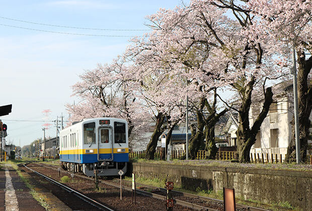 樱花与KIHA5011号