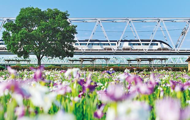 สกายไลน์เนอร์กับดอกไอริสญี่ปุ่น ชุด AE