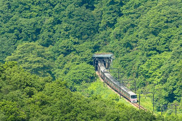 ขบวนรถไฟ ชุด 8000 ที่ไปยังพื้นที่เขียวชอุ่มช่วงต้นฤดูร้อน
