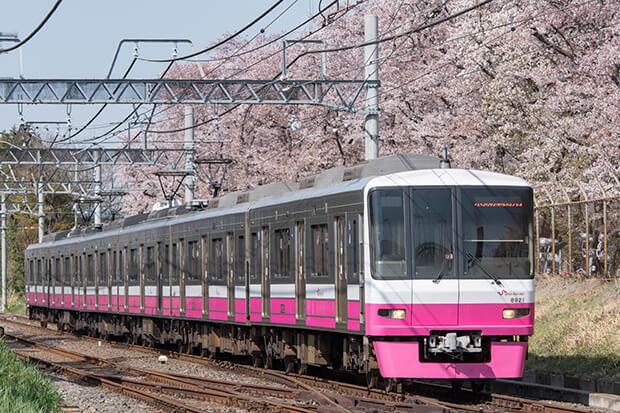 ซากุระบานเต็มที่กับทางรถไฟฟ้าชินเคย์เซย์