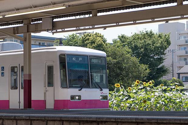 ทางรถไฟฟ้าชินเคย์เซย์กับทานตะวัน
