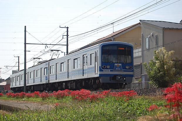 ดอกฮิกันบานะ (ระหว่างอานาเบะกับอีดะโอกะ)