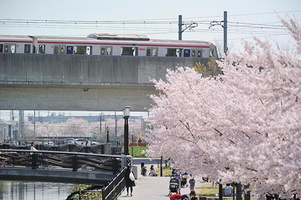 ซากุระกับรถไฟขบวน ชุด TX-2000