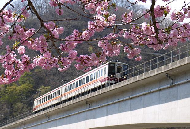 ซากุระกับรถไฟขบวน แบบ 6050