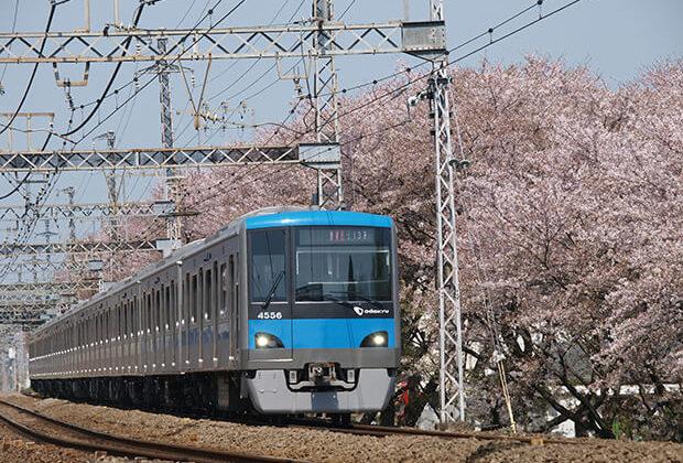春の訪れを告げる桜並木