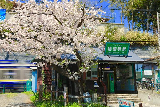 趣ある駅舎と桜