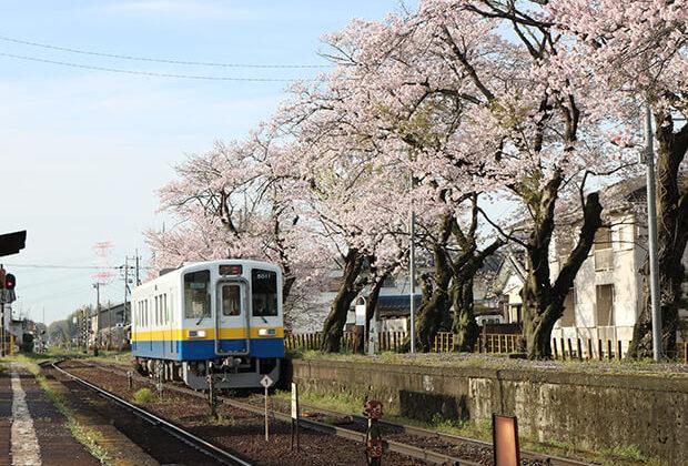 桜とキハ5011号