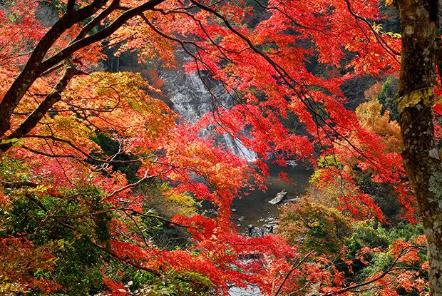錦秋の養老溪谷