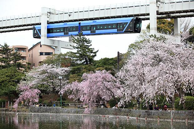 モノレールで桜の花見