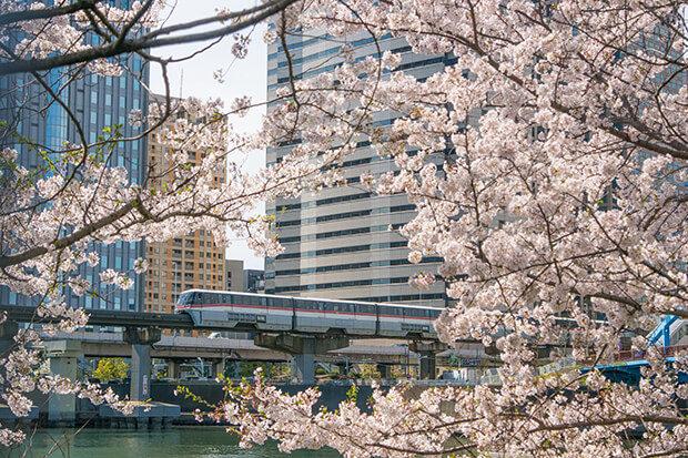 桜と1000形
