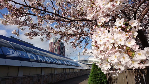 桜咲くお台場