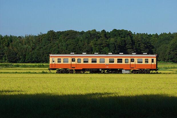 秋の稲穂の中を電車が走る